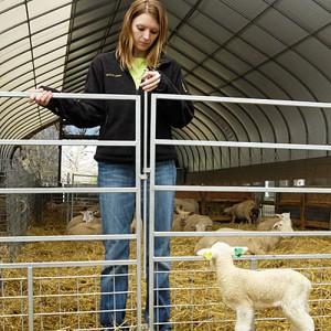 portable mesh panels sheep panels