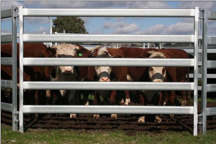 livestock panels